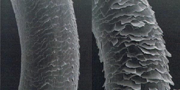 髪の毛の表面「キューティクル」の拡大図