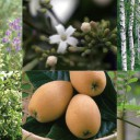 白髪に効果的な植物